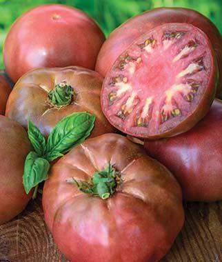 ABRC Tomate, Schwarz Krim