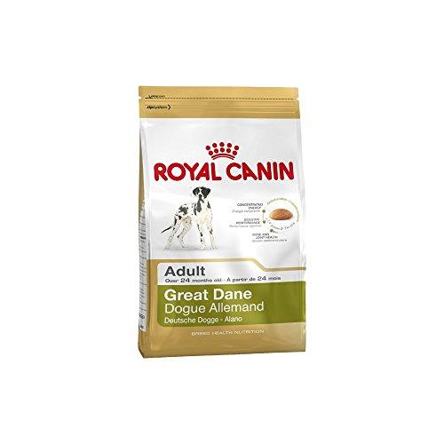 Royal Canin Great Dane 24 Adult 12 kg, 1er Pack (1 x 12 kg)