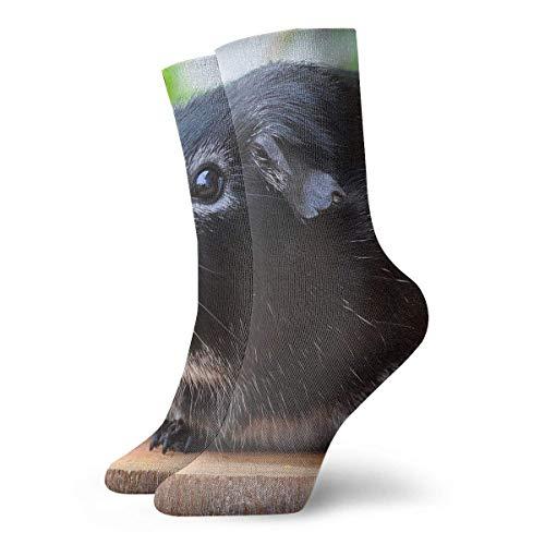 QUEMIN Conejillo de indias Roedor Animal Pelo liso Ocio Algodón Calcetines deportivos Calcetines de compresión clásicos suaves Calcetines deportivos largos para hombres Mujeres Regalo de vacaciones