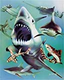 PPOI Malen nach Zahlen Hai Tier Acryl Einzigartiges Geschenk Malen nach Zahlen Blumen Kits Dekoration C9 40x50cm