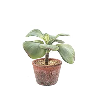 Silk Flower Arrangements SUWIN Cute Artificial Simulation Succulent Potted Plant, Home Window Bonsai, Fresh Interior Decoration, 20X19cm