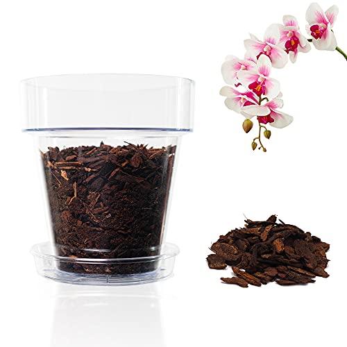 orchidea in vetro senza terra Kalapanta Kit per Rinvasare Le Orchidee: 1 Vaso Trasparente Ø 14cm con Fori drenaggio