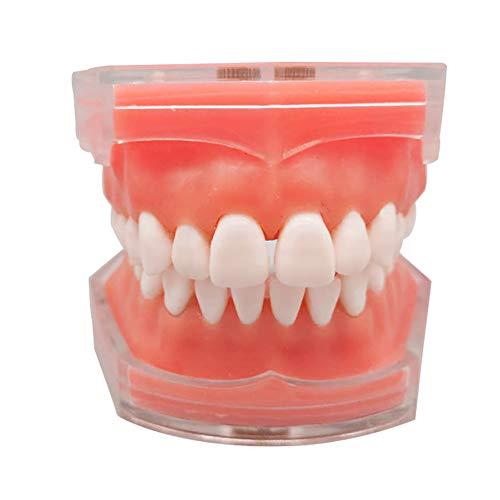EMGAO Zähne Modell Zahnmedizinische Studie Unterrichtsmodell Standard Modell Abnehmbare Zähne Weiches Gummiglust Erwachsenen Modell für Zahnarzt oder Kommunizieren mit Patienten