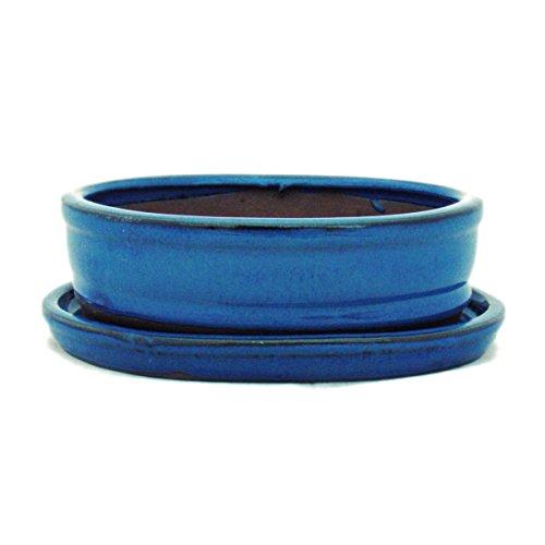 Bonsai pot avec soucoupes bleu taille 2–o7 modèle ovale-longueur : 15,5 cm-b 12 cm-hauteur : 4,5 cm