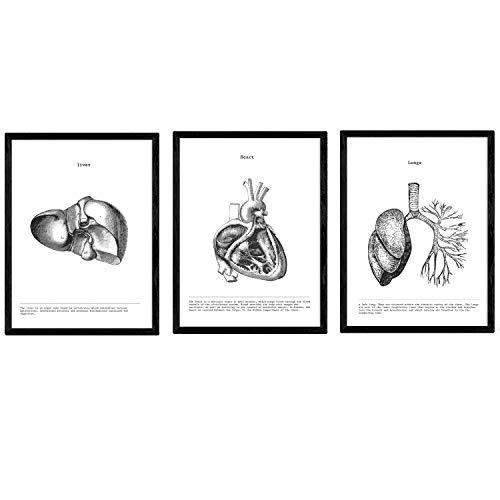 Nacnic Anatomie Poster 3er-Set. Vintage Stil Wanddekoration Abbildung von Leber Herz Lunge und andere Körperteile. Verschiedene menschliche Körper und Anatomie Bilder ohne Rahmen. Größe A4.