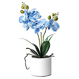 Jusdreen Artificial Flower Bonsai with Ceramic Vase Vivid Orchid Flower Arrangement Phalaenopsis Flowers Pot for Home Office Décor House Decorations
