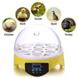 AmyChic Incubadora Digital de 7 Huevos para Pollo, Aves de Corral, Huevo de Pavo con certificación CE