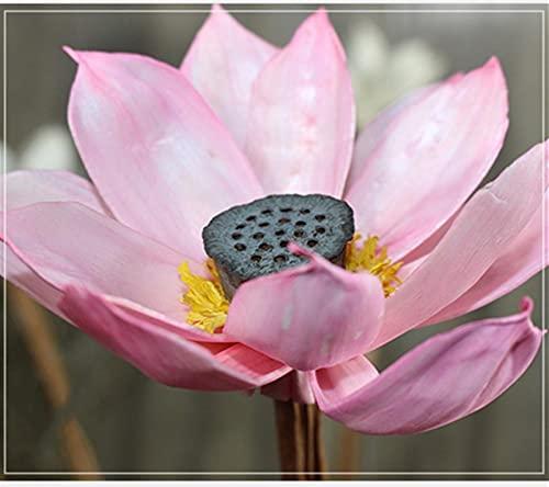 QWSX Flores secas 1 unids 50 cm DIY Natural Hibiscus Lotus Flor Seca decoración de la Boda para la Oficina de la Fiesta de la Fiesta Decorativo Decorativo Hecho a Mano Flores Bonita decoración