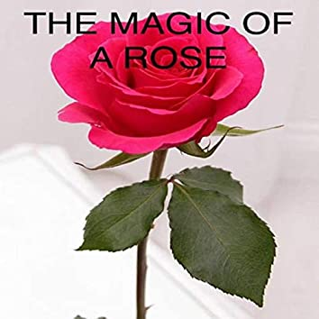 The Magic of a Rose