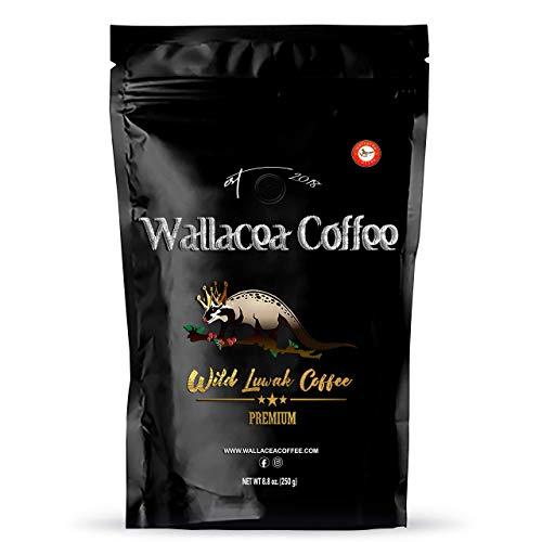 Wallacea Coffee Wild Certified Kopi Luwak Coffee Beans, Gayo Sumatra Indonesia, Gourmet & Exotic Coffee (8.8 oz) (Whole Bean)