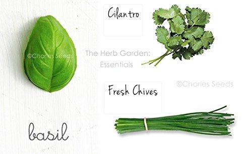 Herb Seeds Variety Pack Coriandre, Ciboulette & Sweet BasilNON GMOSALEHerb jardin
