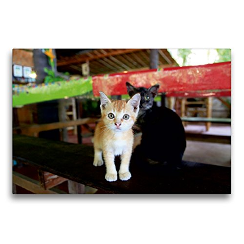 CALVENDO Premium Textil-Leinwand 75 x 50 cm Quer-Format Indonesien, Katze auf dem Tisch, Leinwanddruck von Gabriele Gerner-Haudum