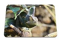 22cmx18cm マウスパッド (カメレオン爬虫類トカゲ) パターンカスタムの マウスパッド