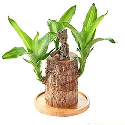 CXQD Planta en Maceta de Madera de la Suerte de Brasil, tocón de árbol, decoración pequeña, Mini Planta hidropónica, decoración de Escritorio de Oficina Interior
