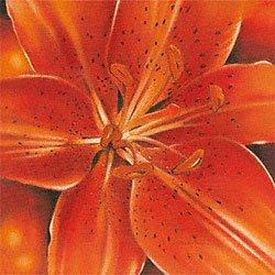Eurographics AWA1109 wysokiej jakości druk artystyczny, Arkadiusz Warminski, Ray Of Orange 30 x 30 cm
