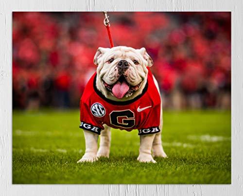 UGA Georgia Bulldogs: Photo Picture Print - UGA X Football Mascot - University of Georgia Art (Small/Medium: 8'x10', Unframed)