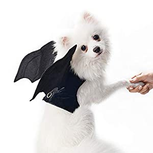 THE BEST DAY Chien vêtements Halloween Bat Ailes Costume pour Petits Chiens vêtements noël Animaux Manteau de Chien Vestes Chihuahua transforment Costumes