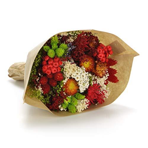 Bouquet Fantasy. Sanremo getrocknete Blumen von der Riviera dei Fiori. Italien (Rot)
