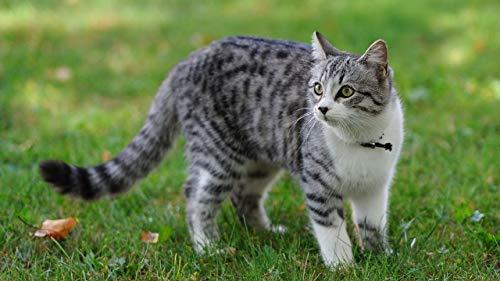 No Il Puzzle Cat Grass Walking Discovery Promuove La Crescita