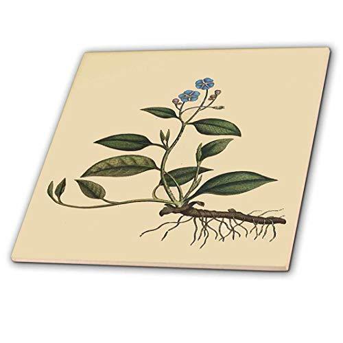 3dRose CT 204746_ 2Print of Naval Würze Pflanze aus 1700Keramik Fliesen, 15,2cm