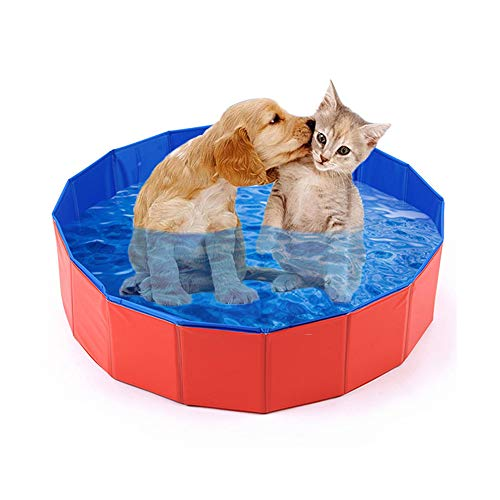 Mcgrady1xm Dog Pool