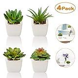 Plantas Suculentas Artificiales