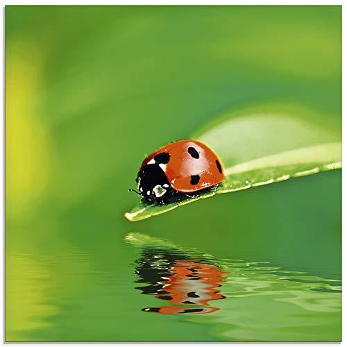 Artland Glasbilder Wandbild Glas Bild einteilig 30x30 cm Quadratisch Natur Tiere Marienkäfer Blatt Wasser Reflektion Grün T5XI