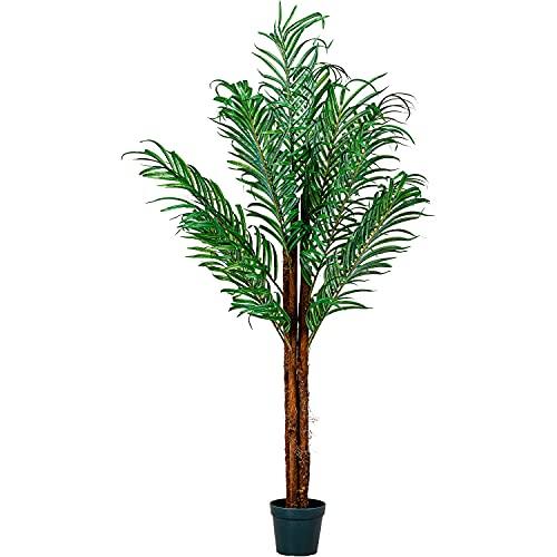 PLANTASIA -  ® Kokos-Palme,