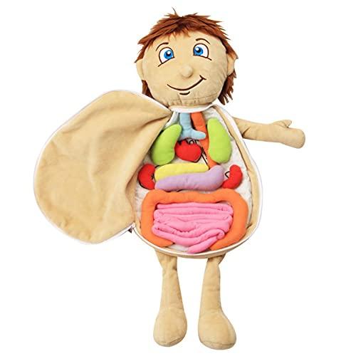 NAKYLUCY Menschlicher Körper Anatomie Spielzeug, Körperorgan-Bewusstseins-Lehrwerkzeuge, Kinder Menschliches Organ Modell Anatomie Puppe Pädagogisches Stofftier, 3D Organ Modell