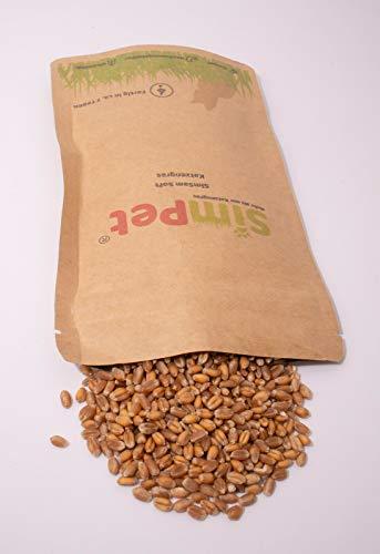 Bio Katzengras Samen ca. 3500 aus Deutschland Süßgras Wieder verschließbar