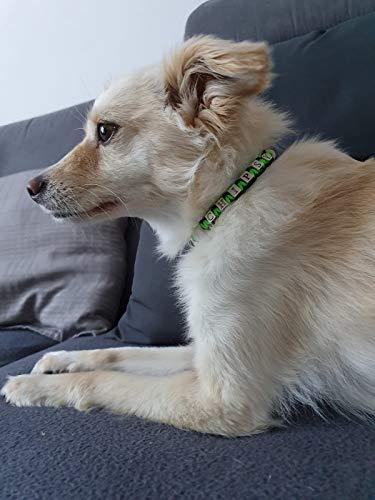 Pfoetchen-Welt Maßanfertigung!!! EM Keramik Hundehalsband. Jetzt auch mit Namen. Menge an EM Keramik wählbar. Beschreibung beachten!