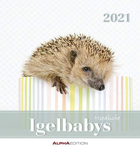 Igelbabys 2021 - Postkartenkalender 16x17 cm - Baby Hedgehogs - zum aufstellen oder aufhängen - Geschenk-Idee - Tierkalender - Gadget