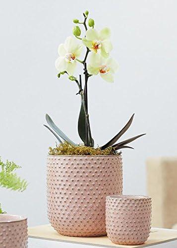Afloral Pink Hobnail Ceramic Pot 5.5