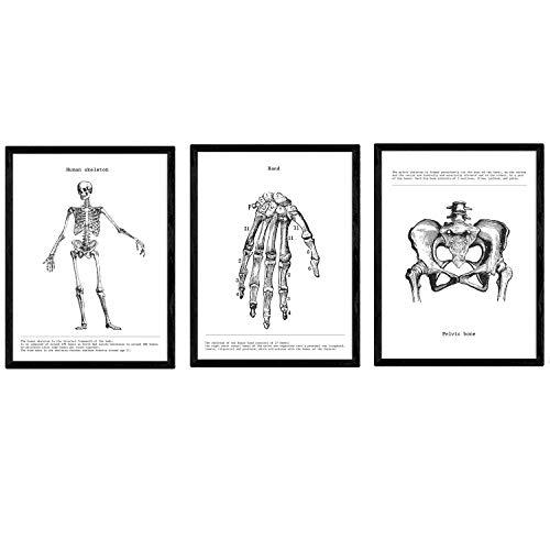 """Nacnic Set de 3 posters de anatomía en blanco y negro con imágenes del cuerpo humano. Pack de láminas sobre biología con """"Esqueleto, Mano y Pelvis"""". Tamaño A4. Sin Marco."""