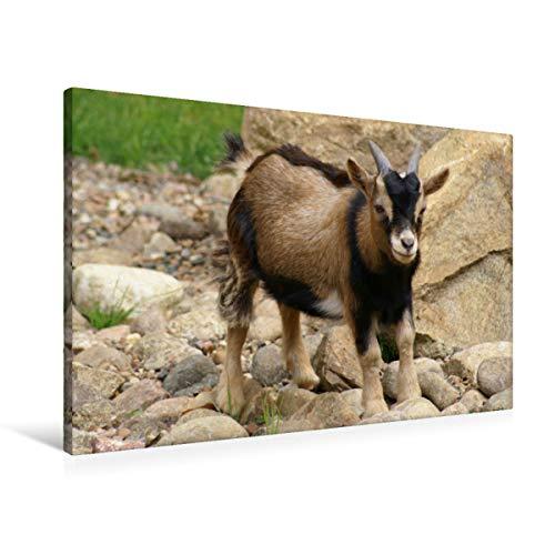 CALVENDO Cabras enanas Marrones para bebés, 90x60 cm