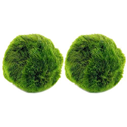 VILLCASE 2 Piezas Marimo Moss Ball Mini Purificación de Agua Algas Decortive Planta Acuática Marimo Ball Planta Viva para Acuario Pecera