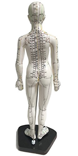 Acupuncture chart female _image0