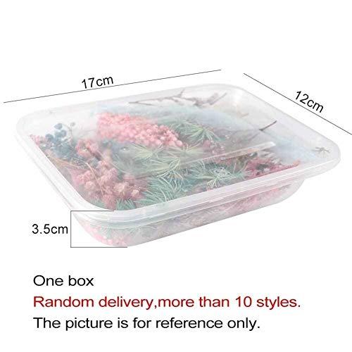 PFW Getrocknete Blumen 1 Box Mix Schöne Reale Getrocknete Blumen Naturblumen for Kunsthandwerk Scrapbooking Harz Schmuck Craft Herstellung Epoxy Mold Füllung (Color : Random 1box)