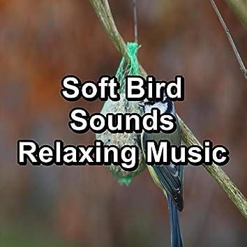 Soft Bird Sounds Relaxing Music