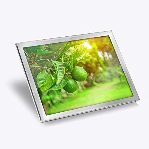Destination 16699 Set de table en vinyle argenté 20 x 25 cm – Citrus Fruits tilleul arbre fruitier/Tapis de salle à manger/lavable/imperméable