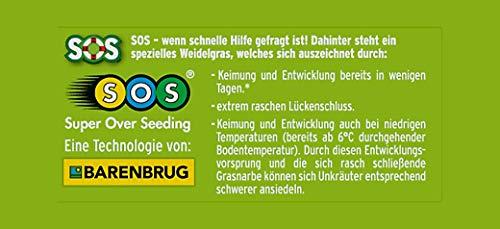 Substral Rasensamen Sport und Spiel, strapazierfähige Rasensaat-Mischung mit Grünfärbung gegen Vogelfraß, 10kg, 500m²