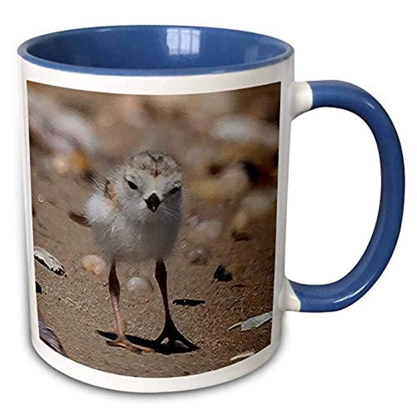 3dRose Roni Chastain Photography - Piping Plover Chick - 15oz Two-Tone Blue Mug (mug_294671_11)