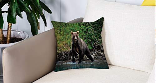 Luoquan Kissenbezüge Super Weich Home Dekoration,Grizzly Braunbär im See Alaska unberührten Wald Dschungel Wildlife Image deko,Kopfkissenbezug Pillowcase Kissen für Wohnzimmer Sofa Bed,45x45cm