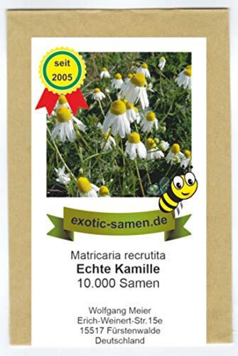 Echte Kamille - Bienenweide - Matricaria recrutita - 10.000 Samen