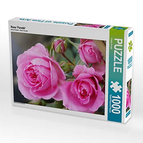 CALVENDO Puzzle Rosa 'Parade' 1000 Teile Lege-Größe 64 x 48 cm Foto-Puzzle Bild von Gisela Kruse