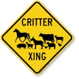 critter crossing