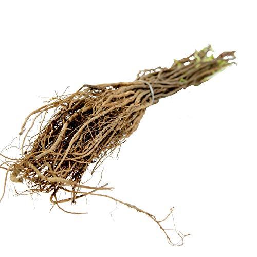 Robinie (Akazie) 'Nyirsegi' Baum bewurzelt 60/100, schnellwüchsig, geradschaftig als Energieholz/Wertholz, (bot. Robinia pseudoacacia) 20 Stück