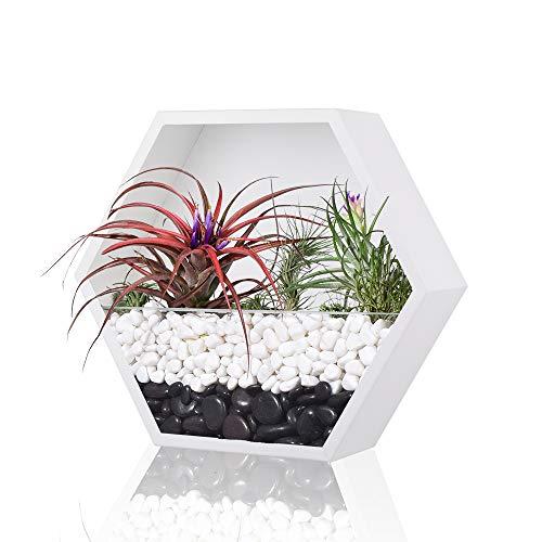 Vaso da parete esagonale, in metallo, stile retrò, per piante, stile vintage, in ferro, geometrico, per cactus succulento, per interni (bianco, L)