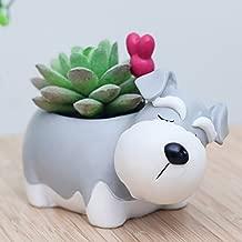 Home Desk Planter Herb Flower Cactus Succulent Resin Pot Basket Box Case Decor Schnauzer