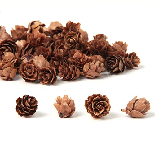 Ira Pollitt 300 Pieces Mini Natural Pine Cones Christmas Natural Pine Cones Ornaments Thanksgiving Pinecones Ornaments for DIY Crafts,Home Decoration, Fall and Christmas
